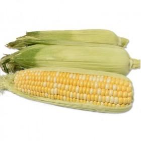 5斤云南有机新鲜水果包谷非转基因甜玉米棒