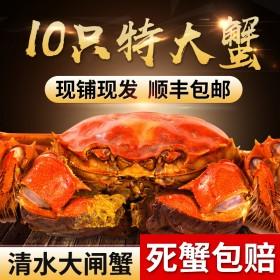 阳澄湖特大大闸蟹3.5 10只装礼盒