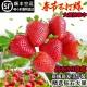 顺丰3斤新鲜大草莓带箱净果1150g  2465833
