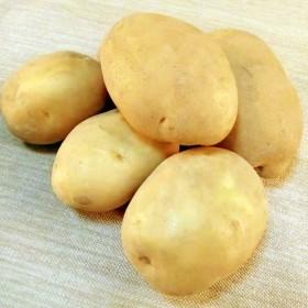 山西土豆黄皮黄心土豆糯面大土豆农家马铃薯洋芋5斤