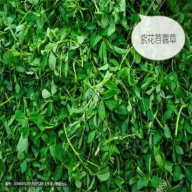 供应烘干紫花苜蓿草,兔子龙猫琢鼠等食草宠物牧草