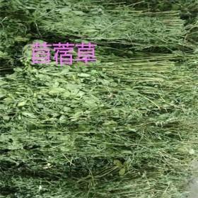 供应特价紫花苜蓿草兔子干草龙猫仓鼠牧草荷兰猪牧草