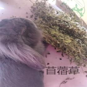 出售低级烘干紫花苜蓿草龙猫兔子金丝熊牧草仓鼠零食