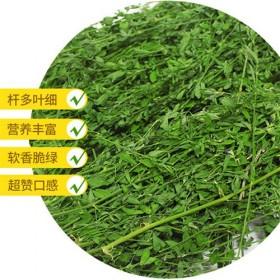 供应紫花苜蓿草兔子龙猫仓鼠牧草金丝熊琢鼠零食