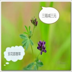 紫花苜蓿 草兔兔 龙猫 爱草 荷兰猪牧草烘干型