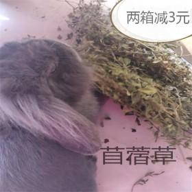 出售低级烘干紫花苜蓿草龙猫兔子牧草仓鼠零食