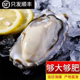 5斤40只左右现捞鲜活生蚝新鲜乳山牡蛎带壳大海蛎子