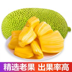海南现摘菠萝蜜新鲜水果菠萝26-28斤肉多优质大果