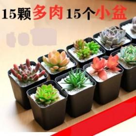 【15棵多肉套餐】多肉植物