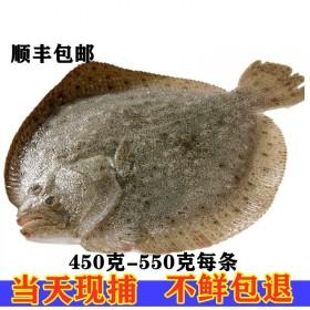 野生新鲜多宝鱼3条装每条9-1.1斤海鲜野生海鱼比