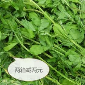 特价批发紫花苜蓿草龙猫兔子荷兰猪磨牙口粮新鲜小麦草