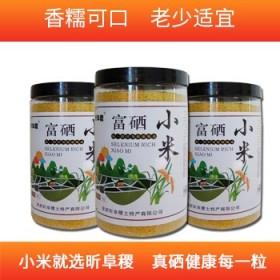 富硒小米东北农家特产小米健康绿色1kg桶装