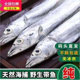无冰海捕带鱼5斤整条海鲜特大整箱东海带鱼中段水产鲜