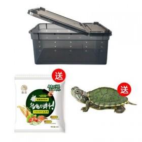 小乌龟×30天龟粮×手提龟盆