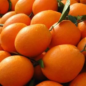 【特价5斤】桂林高山脐橙新鲜橙子水果鲜果橙手剥脐橙