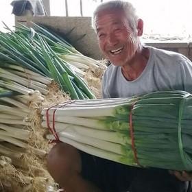 5斤 山东铁杆大葱甜脆蘸酱大葱新鲜蔬菜生吃