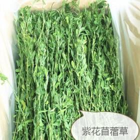 供应烘干紫花苜蓿草兔子龙猫琢鼠等食草动物烘干小麦草