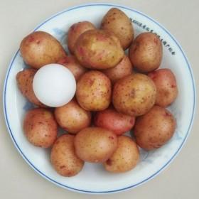 5斤 新鲜小土豆包邮云南红皮黄心小土豆马铃薯小洋芋