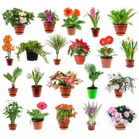 40种 四季易种花种子满天星薰衣草太阳花