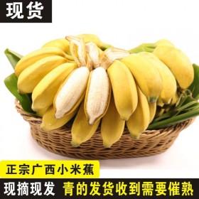 广西小米蕉10斤新鲜香蕉当季水果整箱皇帝蕉带箱