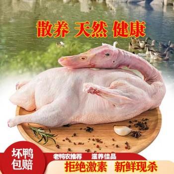 农家散养老鸭土鸭麻鸭活鸭现杀完4.4斤2只装