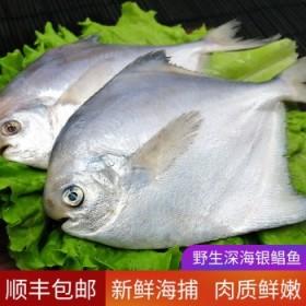 【顺丰】东海野生鲳鱼海捕白鲳发5斤