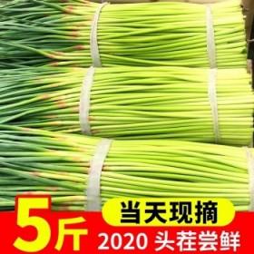 5斤批发河南农家自种蒜薹蒜苗蒜毫青蒜时令蔬菜