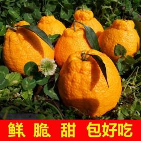 脆甜多汁四川丑橘柑橘子桔子带箱9.6--10斤