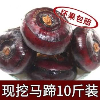 新鲜马蹄荸荠水果蔬菜地栗地梨包邮带箱10斤装