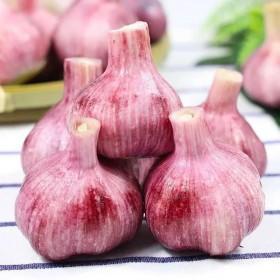 【10斤】河南新鲜大蒜紫皮蒜红皮蒜
