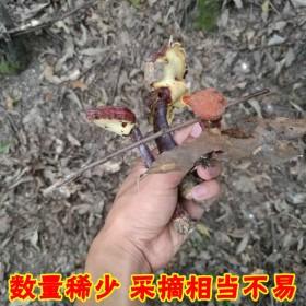 灵芝野生 神农架深山紫林芝龙250克 赤灵芝可切片