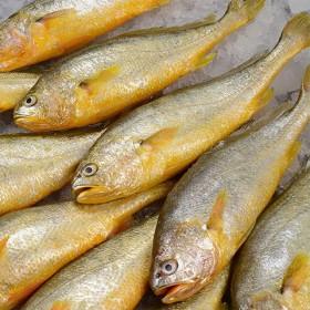 5斤中号黄花鱼小黄花鱼冷冻鲜山东青岛野生花鱼海鲜整