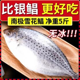 5斤鲳鱼新鲜冷冻比银鲳鱼金鲳鱼更好的南极雪花鲳进口