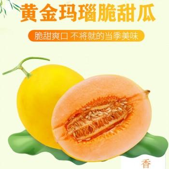 陕西阎良甜瓜黄河蜜瓜黄金蜜瓜黄皮脆甜甜瓜带箱10斤
