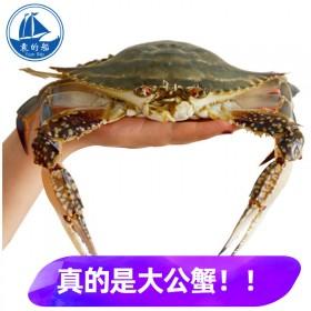 10斤/箱 6-9两/只鲜活速冻大螃蟹冰冻大梭子蟹