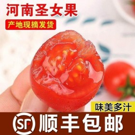 现摘圣女果新鲜小番茄孕妇水果蔬菜非千禧酸甜樱桃小西