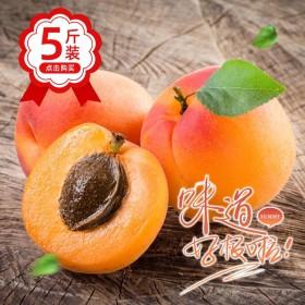 【现货】五斤装2020年新杏大黄杏酸杏现摘现发当季