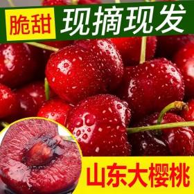 现摘现发精品山东大樱桃新鲜水果5斤车厘子美早红灯樱