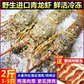 海鲜2斤3至4只大龙虾青龙虾鲜活冷冻大虾波龙黑虎虾