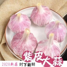 2020新干蒜金乡大蒜头现挖大蒜紫红皮大蒜精品蒜批
