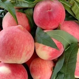 陕西新鲜水蜜桃毛桃应急新鲜水果脆甜桃子多汁5斤小果