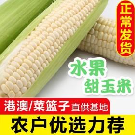 精选洞庭水果玉米新鲜爆浆牛奶白玉米即食水果软糯香甜