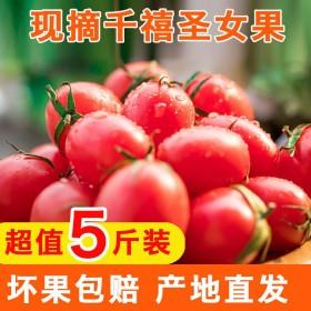 山东千禧小番茄圣女果新鲜水果包邮小番茄西红柿子拼盘