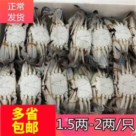 梭子蟹鲜螃蟹新鲜海鲜冷冻速冻体冰冻梭子蟹10斤