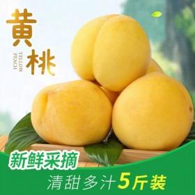 黄桃整箱5斤毛桃新鲜水果