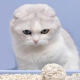 拼多多拼单猫咪用品膨润土猫砂2斤猫咪用品