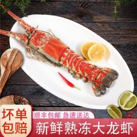 缔海 野生大龙虾鲜活大龙虾野生大红龙虾冷冻水产40