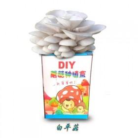 家庭种植蘑菇平菇菌包diy彩盒装