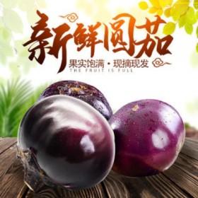 现摘紫皮圆茄子5斤新鲜大圆茄