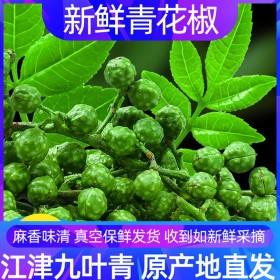 新鲜青花椒350g新鲜藤椒麻椒保鲜花椒特麻特香四川